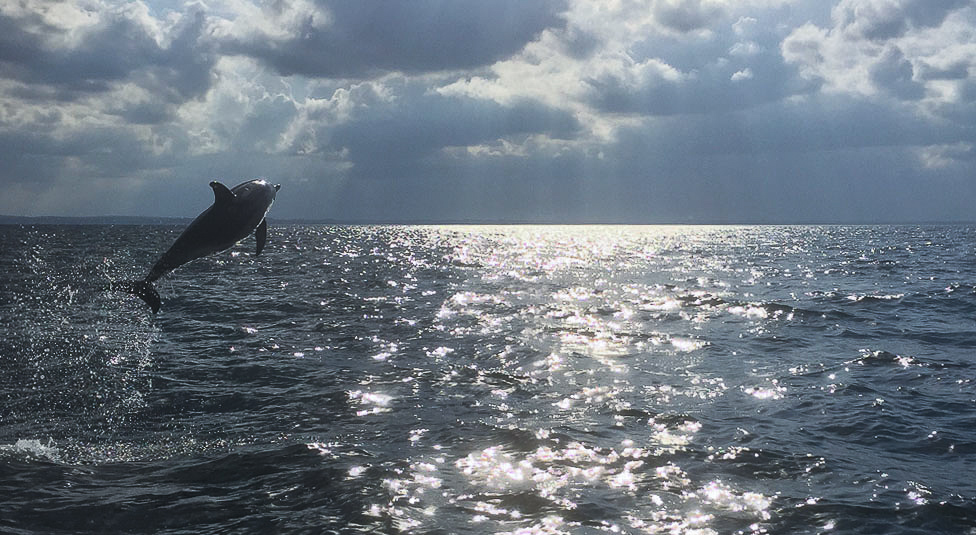 Den blåfinnede tunfisk Helsingør Denmark