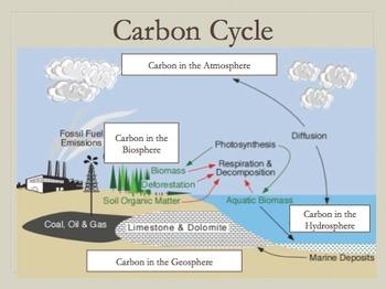 Kulstof C diagram